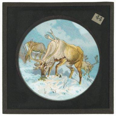 Elk or Deer in the snow