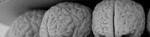 Black and white photo of a shelf with three plastic brains.