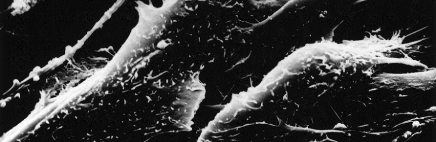 Microscopic image of skin cells