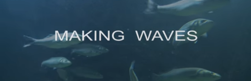 """Making Waves"" underwater image of fish swimming"