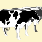 illustration of a row of dairy cows
