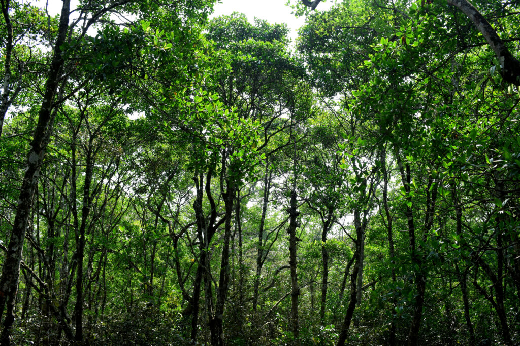 An image of a forest of trees with green leaves
