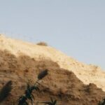 Tall crops and sandy rock formations